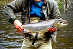 Tailor's Pool Salmon